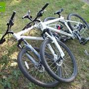 Экзотические вело туры. Семейные поездки на велосипеде Прогулки на велосипеде. Велотуры. Велопрогулки. По лесу на велосипеде. фото