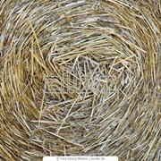 Солома пшеничная фото