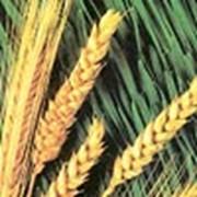 Лизинг для АПК Техника для агропромышленного комплекса – в лизинг фото