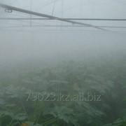 Системы туманообразования для теплиц фото