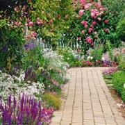 Геосетка СТРЭН для армирования садовых дорожек фото