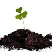 Универсальный почвогрунт для садовых растений фото