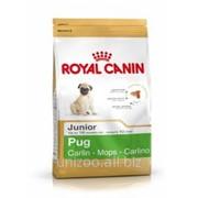 Сухой корм для собак Royal Canin PUG Junior - 0,5кг фото