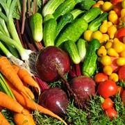 Пакетированные семена овощных культур, семена овощные почтой Украина фото