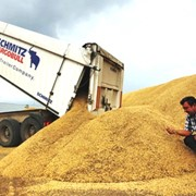 Пшеница На Экспорт, Казахстан фото