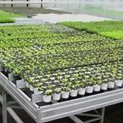 Гидрогель для выращивания рассады фото