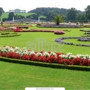 Проектирование, посадка цветников фото