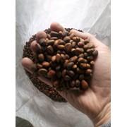Кедровый орех в скорлупе фото