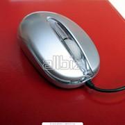 Мыши фото