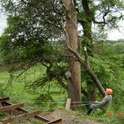Корчевка деревьев фото