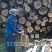 Пилим и колем дрова в Витебске фото