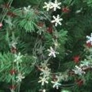 Гирлянда Весёлые снежинки фото