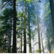 Общественная экологическая экспертиза. Разработка отчета об инвентаризации источников выбросов загрязняющих веществ в атмосферу стационарными истониками выбросов предприятия. фото