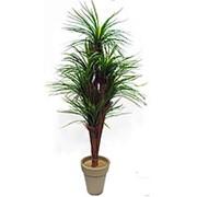 Пальма искусственная 180 см (без горшка) фото