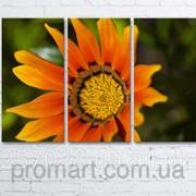 Модульна картина на полотні Помаранчева квітка код КМ6090-015 фото