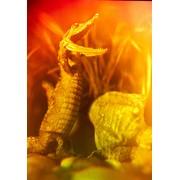 Голограмма художественная Крокодил фото