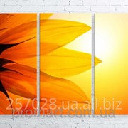Модульна картина на полотні Великий сонях код КМ100150-069 фото