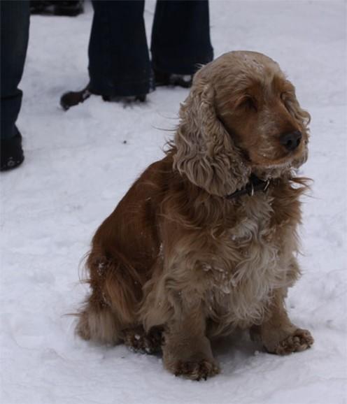 клуб в москве охотничьих собак