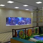 Разовое обслуживание аквариумов фото