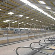 Молочнотоварные фермы фото