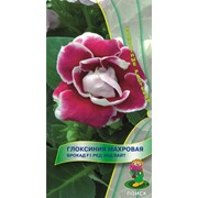 Семена комнатного растения Глоксиния Брокад Ред энд Вайт фото