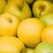 Саженцы яблок Голден фото