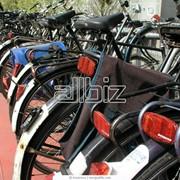 Прокат, аренда дорожных велосипедов фото