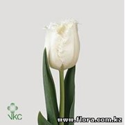 Тюльпан Honeymoon фото