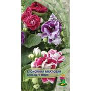 Семена комнатного растения Глоксиния Брокад микс фото