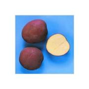 Картофель столовый среднепоздний, сорт Журавинка фото
