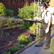 Борьба с вредителями растений, Украина Киев фото