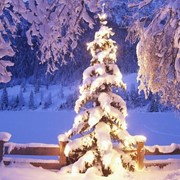 Праздник Рождества в конюшнях Ребала. фото