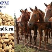 Комбикорм гранулированный для лошадей фото