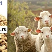Комбикорм гранулированный для овец фото