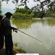 Рыболовство в прудах фото