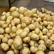Хранение картофеля фото