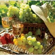Вино Туризм фото