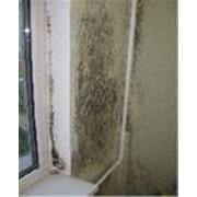 Уничтожение грибков фото