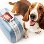 Помощь в оформлении документов для перевозки животных фото
