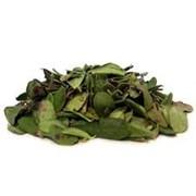Брусники листья фото