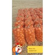 Подставка овощей, лук репчатый фото