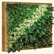 Green Wall. Gradini verticale. Вертикальные сады фото