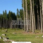 Государственное агентство лесных ресурсов Украины, ГП фото