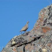 Охота на птиц в Казахстане фото