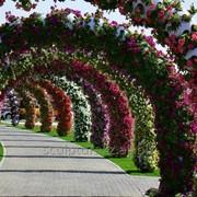Аренда арок из цветов в Алматы фото