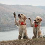 Кинолог, зоопсихолог, дрессировка собак фото
