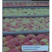 Линии по переработке яблок UNITEC (Италия) фото