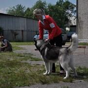 Хендлинг. Показ вашей собаки в ринге фото