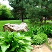 Питомник растений Мишково фото