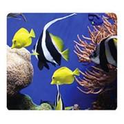 Коврик Fellowes Earth Series Рыбки фото
